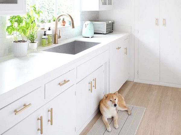 dog in front of white cabinets with Emtek pulls